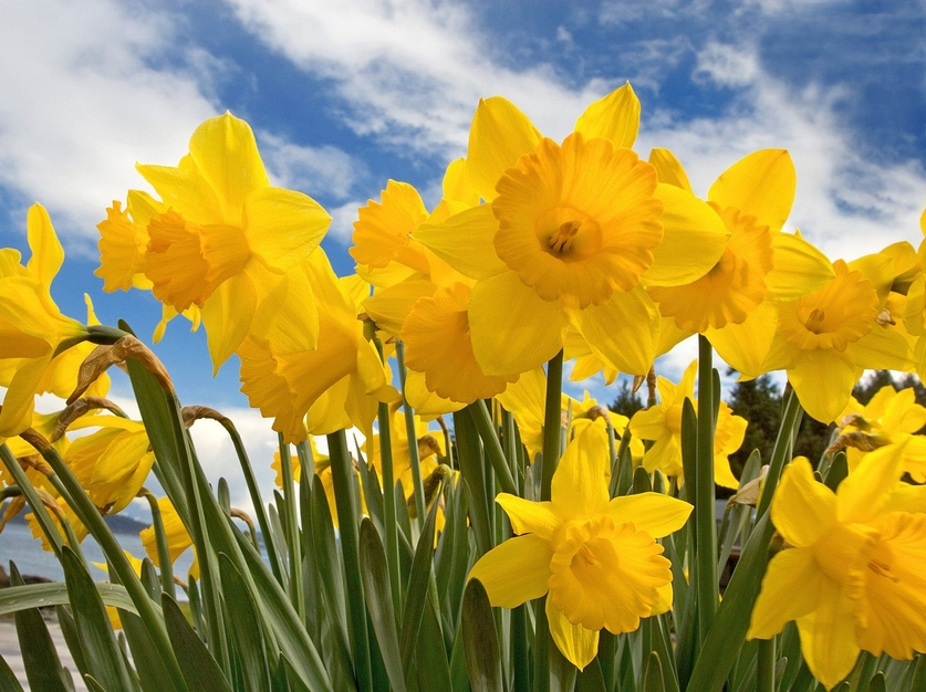 Spring Fayre in Hemel Hempstead